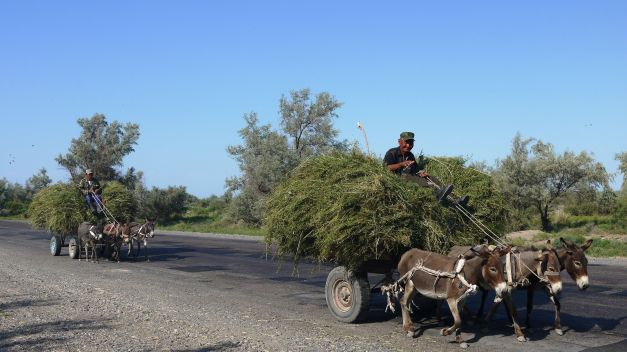 Donkeys are still the vehicle of choice for many  farmers