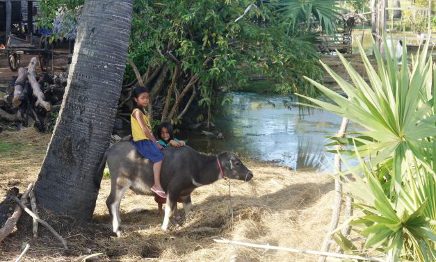 I think I would swap the bike for a water buffalo anyday...