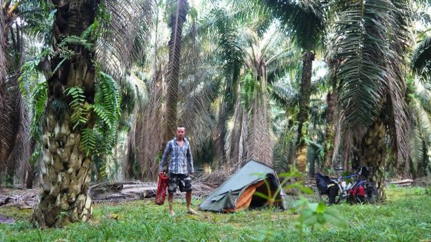 Camping under palm tree oil trees
